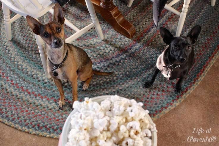 dogs-love-popcorn