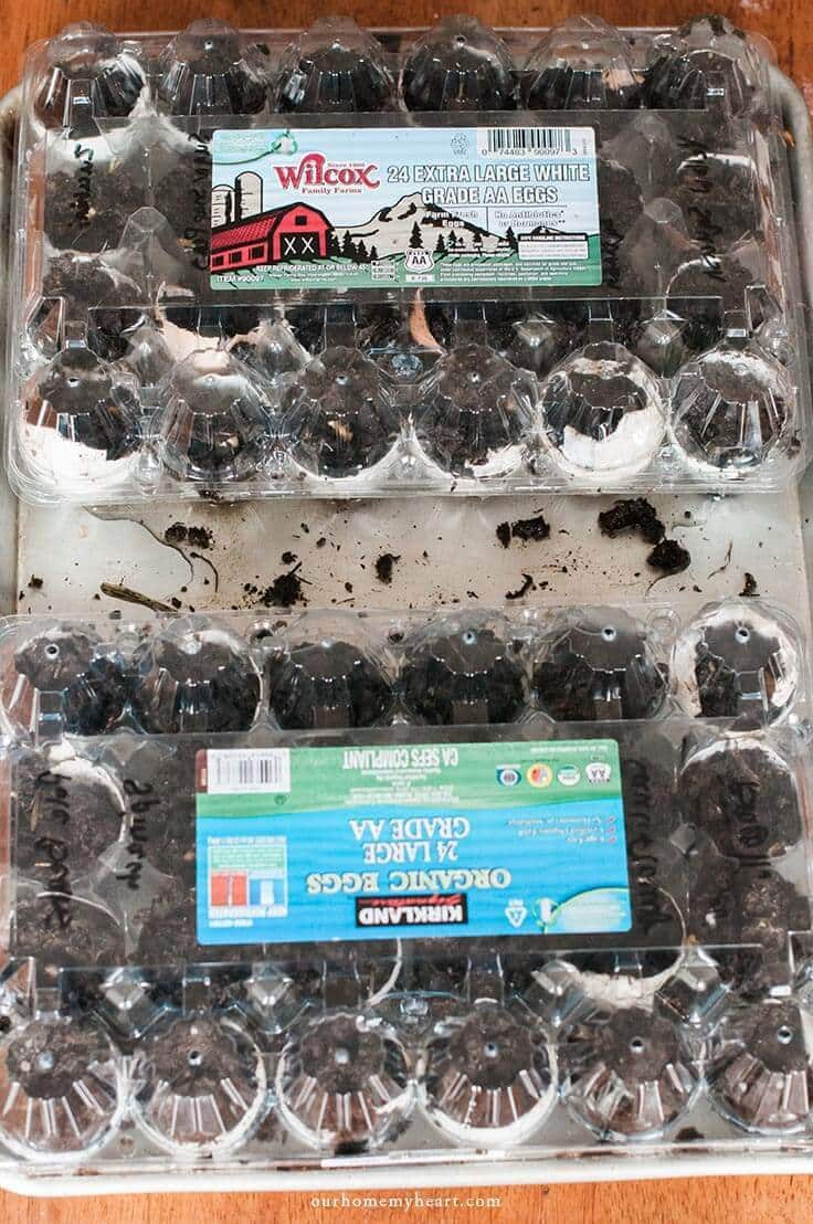 Have you ever wondered how to start your garden seeds with little effort? This winter egg carton greenhouse is effective and fun too!