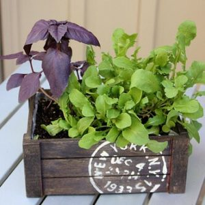 salad-planters-mothers-day-gift