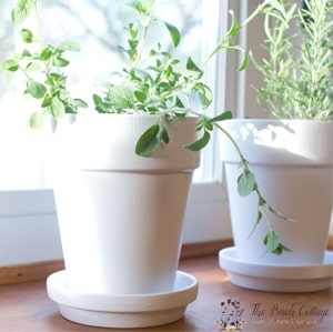Learn how to paint terra cotta pots with this easy tutorial from The Birch Cottage for Ideas for the Home by Kenarry®