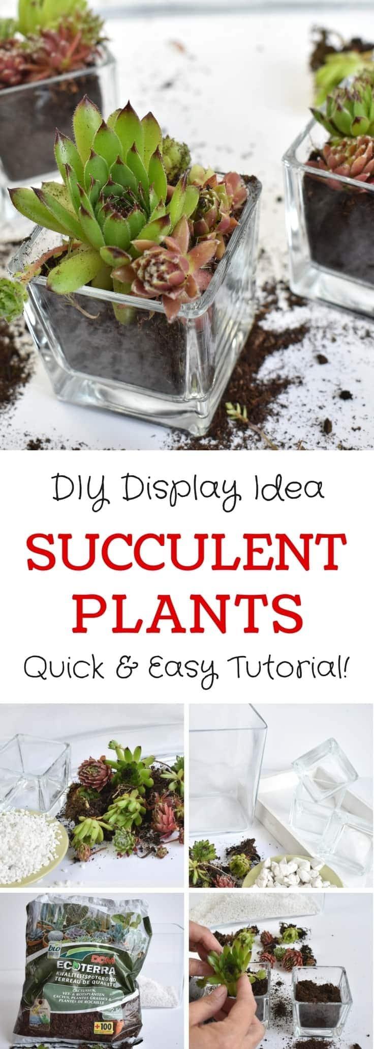 Simple & Stylish DIY Succulent Plant Display Idea