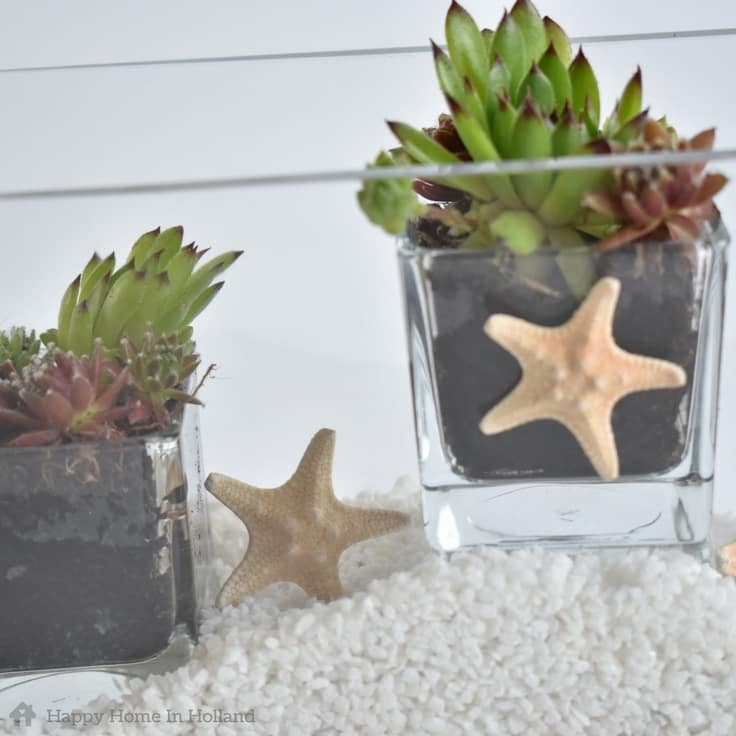 Simple & Stylish DIY Succulent Plant Display Idea - Click For Tutorial