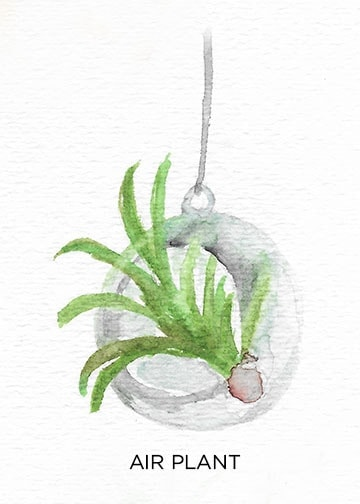 A Guide to Caring for Easy to Grow Indoor Plants including Air Plants