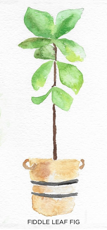A Guide to Caring for Easy to Grow Indoor Plants including Fiddle Leaf Fig