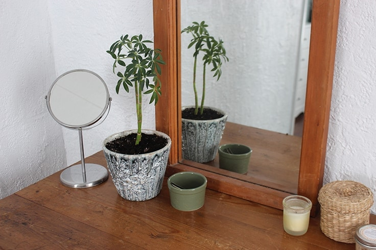 Add a dwarf banana tree or another houseplant to a dresser to liven up your home decor.