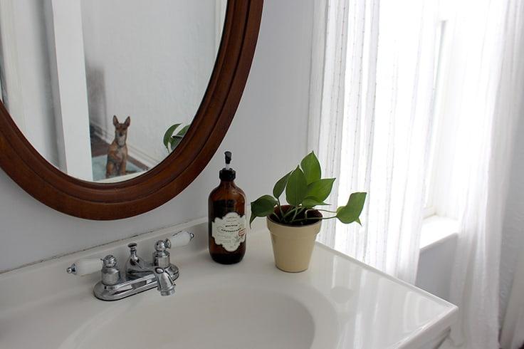 A small pothos plant on a sink in a half bathroom.
