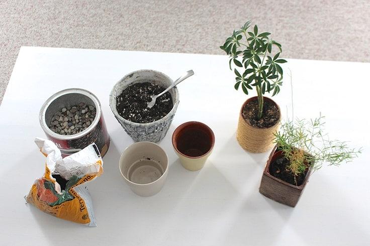 How to replant indoor plants