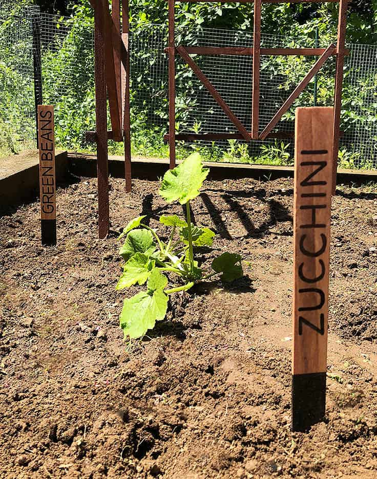 DIY Plant Markers for Your Garden #garden #plantmarkers #gardening