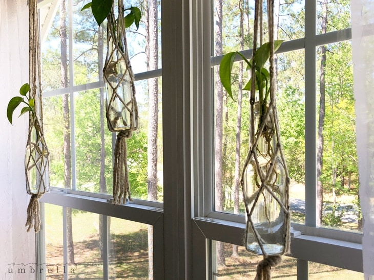 diy macrame plant hangers hanging in the window