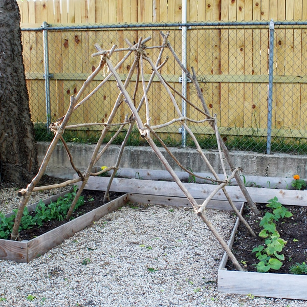 12 Backyard Garden Tips to Try This Summer at OneMamasDailyDrama.com