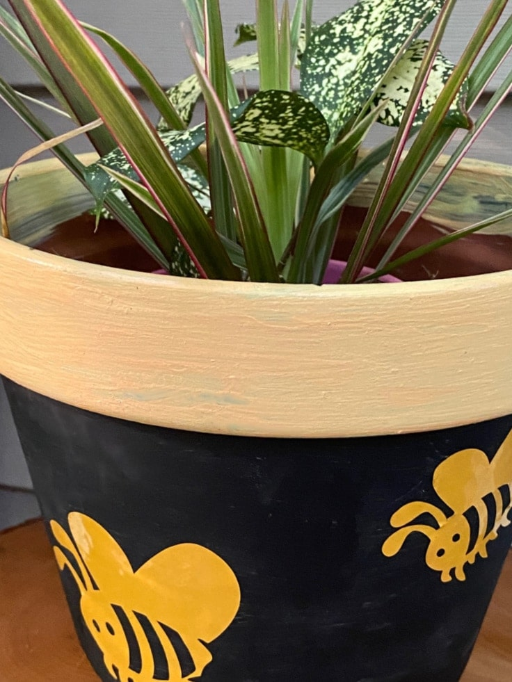 Bumblebees on flower pot with plant.